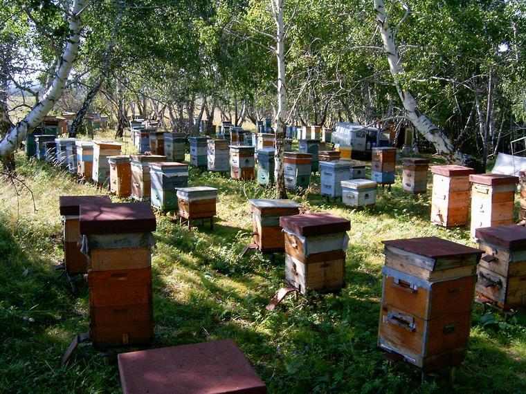 Секреты пчеловодства